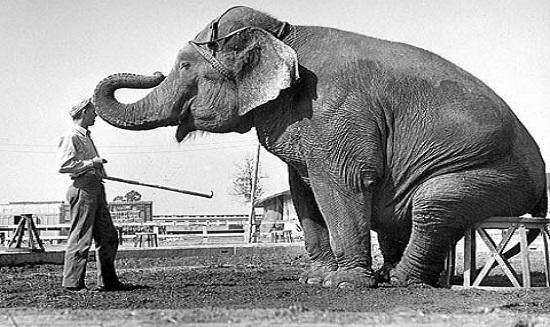 Фокус-легенда со слоном